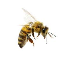Biene im Anflug auf Ihr Zuhause