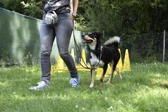 GOOD DOGS Hundeschule - Heusenstamm - Rodgau - Obertshausen - Erziehung - Hund - Junghunde