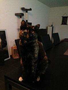 Anima-Balance: Katze «Diva»