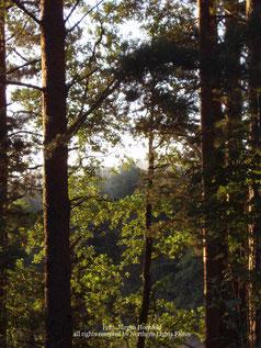 Wildnis in Schweden weit außerhalb der Hörweite von zivilisations Geräuschen. Northern lights Flutes Wildlife Recording