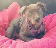 Lucy bei ihrer ersten Autofahrt am Rücksitz