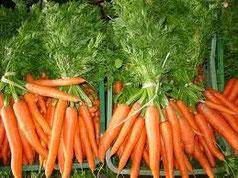 Hojas de Zanahorias