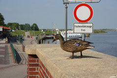 11 Ente+Schild/Duck+sign