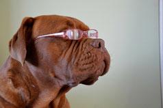 お子様のメガネ選びは慎重に