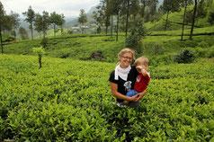 Anja mit Timeo inmitten von Teebüschen