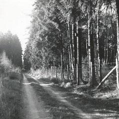 Schutzgebiet an der Dürrbruchschneise Abteilung 2
