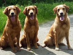 v.l.n.r. Enya, Maven und Ginger