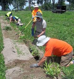 Demetrius Allen (from upper left), Greg Van Vleet, Jeff Moore, Gloria Diggs, Bill Knox, and Tim Howe fill in the soil around the plant roots.