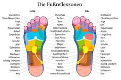 """<img src=""""fußreflexzonen.jpg"""" alt=""""Fußreflexzonen und deren Bedeutung"""">"""
