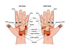 """<img src=""""hand-reflexology-chart.jpg"""" alt=""""Hand Reflexology Chart"""">"""