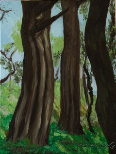 0027-Pines in St Marc Jaumegarde, 40/30cm oil on canvas