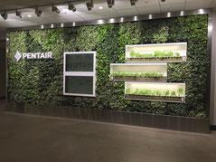 jardín vertical interior con tres tipos de epipremnun plantados alrededor de una pantalla.  Una solución y ejemplo de jardín vertical a medida.