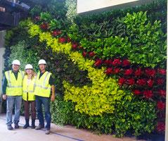 Jardín vertical plantado con neoregelia, epipremnun, aglaonema y otras plantas agrupadas en zonas distinctas para formar un diseño