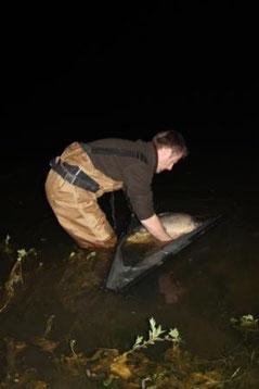 acrocarpe.com étang de pêche à la carpe