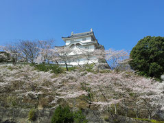 徳川四天王本多忠勝公の居城大多喜城桜風景