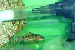L 270 Подросток в аквариуме