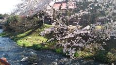 宮田川沿[2017年4月13日 撮影] 斯道館裏