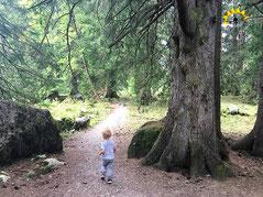 Man muss nicht rauf. Schöne Wanderrouten am Fuße des Säntis.
