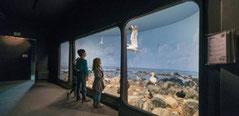 maison-baie-de-somme-observation-oiseaux-decouverte-nature-picardie