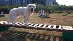Mobility beim Hundefreilauf Stade