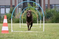 Hoopers-Training beim Hundefreilauf Stade