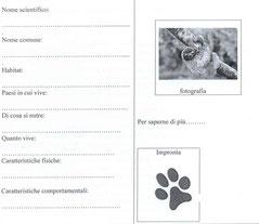 Carta d'identità del bradipo