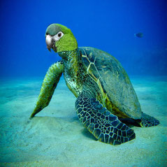 """Sea Turtle/Parrot"" - RoellinaW"