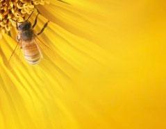 I prodotti delle api come miele, pappa reale, polline, propoli: li puoi trovare all'erboristeria L'Altea
