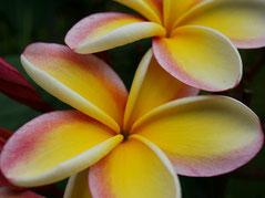 ハワイ オアフ島 貸切 観光タクシー ココクレーター植物園 専用車チャーター 日本人