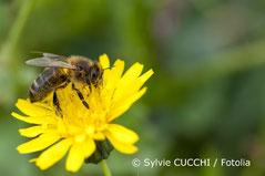 Foto - Blume mit einer Biene