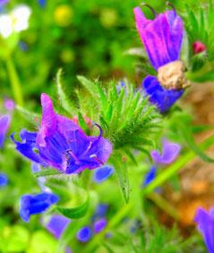 Frühling, Seele, Blumen, Blüten