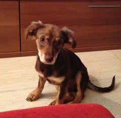 Tania adoptada!