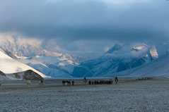 Nomaden Ladakh Kharnak