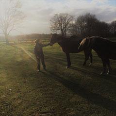 Coaching met paard