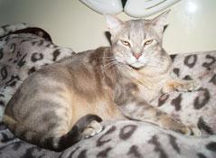 домики для кошек в новосибирске