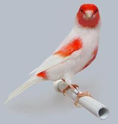 Tomada de:www.aviariopedroeguizabal.com