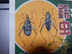 この画像は鈴虫です