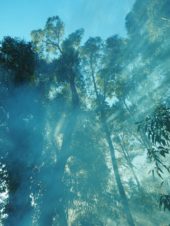 A Bushfire Attack Level assessment measures bushfire risk and threat level for a building.