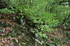 30 Pflanzen im Wald/Plants in a forest