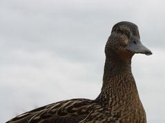 23 Ente+Aussicht/Duck+View