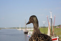 18 Ente+Aussicht/Duck+View