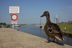 7 Ente+Aussicht/Duck+View