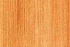 тополь серый (пирамидальный)