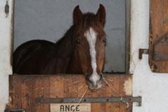 ange poney de concours