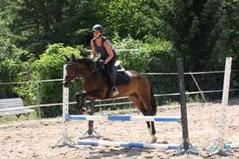 poney de concours