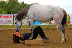 clinique charles étienne ménard ecurie kalin