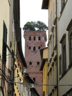 Torre di Guinigi, mit Steineichen bewachsener Turm in Lucca