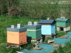 Les ruches du rucher école de la Maison du Miel et des Abeilles du Val Dunois