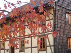 Heilpflanzenschule Albshausen
