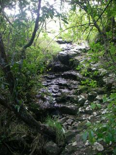 Haruru Falls Track
